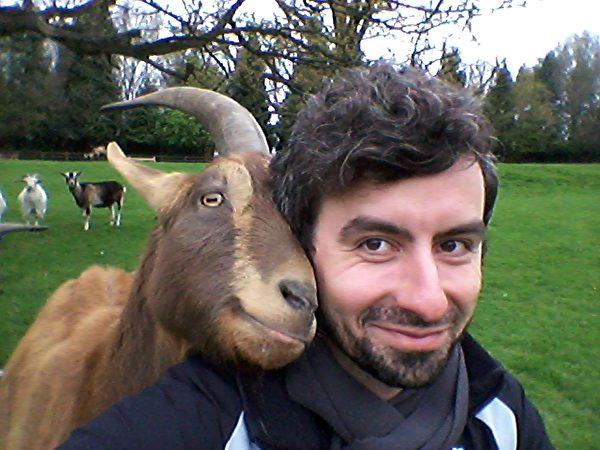 Goat. (wikipedia)