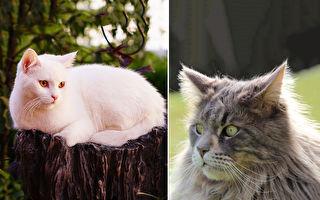 貓咪會報恩?機靈聰明還會做家事