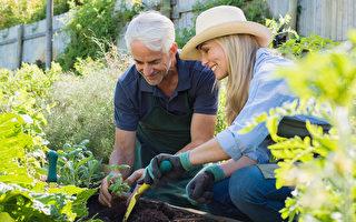 疫情使人焦慮 來點家庭園藝舒緩心情