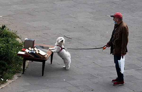 疫情持续延烧,有越来越多人无法正常上班、上课。布拉克认为,当前的确是领养宠物的好时机。(TIZIANA FABI/AFP via Getty Images)