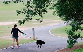 疫情中养宠物纾解焦虑 还降血压 要注意2件事