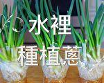 【美食天堂】一杯水就可以种葱~轻松收成