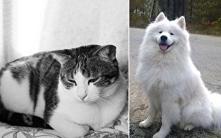 貓狗個性差很大 韓飼主視頻實測「貓狗大不同」
