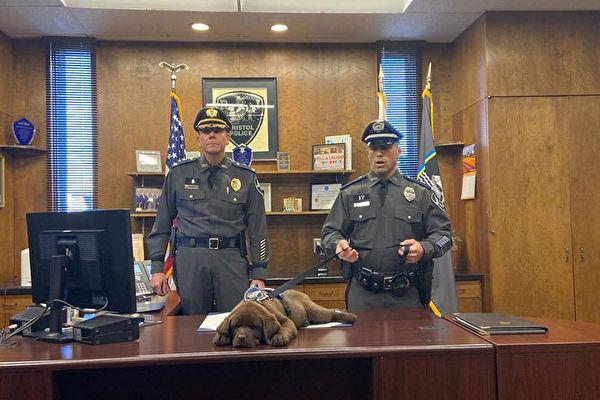 美国警犬宝宝在自己的宣誓就职典礼上睡着
