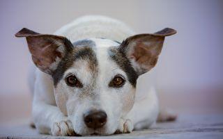怕狗的人收養怕人的狗 結局感動人和狗