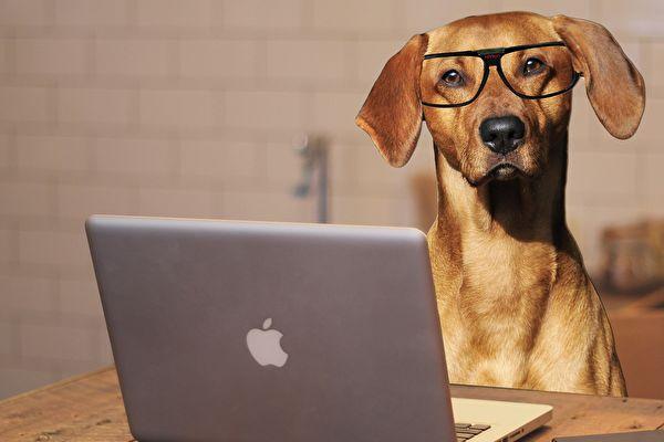 趣味组图:疫情下小狗在家上班