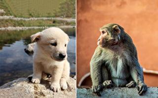 印度母猴收养流浪狗宝宝 民众惊讶跨种族的爱