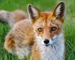 移形幻化 狐女对其情人的点悟