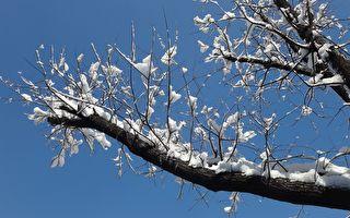 七絕:望春風