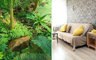 """""""疯狂热爱植物的女士""""直接把纽约公寓变丛林"""