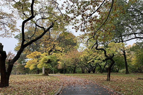 公園人流增   紐約市成立公園「恢復基金」 填補財政缺口