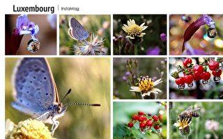 生态微距摄影之美 摄影师:微观世界很精彩