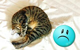 「世界上最哀怨的貓」融化網友心:想抱緊處理