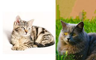 飼主說他的貓咪會說話、專家說不會 那你說呢?