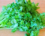【美食天堂】新鲜香菜3种保存法 放久也翠绿