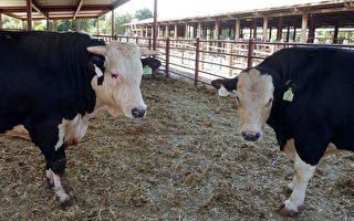 川普:下週起採購30億美元肉類和乳製品