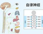 什么是自律神经?(大纪元制图)