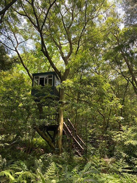 一座隱身於森林中的淺綠色樹屋。