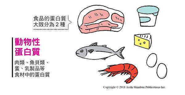 動物性蛋白質:肉類、魚貝類、蛋、乳製品等食材中的蛋白質,對增加肌肉非常有效。(三采文化提供)