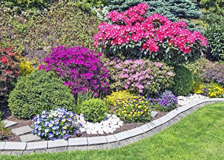 美丽的庭院