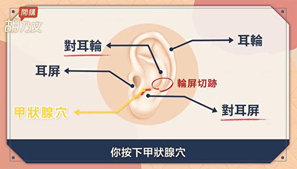不管甲状腺亢进或低下,都可以按甲状腺穴来缓解症状,改善甲状腺功能。(胡乃文开讲提供)