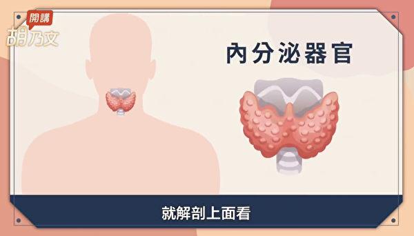 甲状腺在喉结的前方,是重要的内分泌器官。(胡乃文开讲提供)