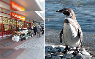无限期关闭动物园?冰岛超市救企鹅争取开放