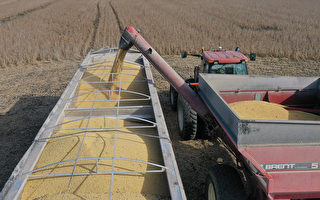 为需求不甩北京命令 仍有中企购买美国大豆
