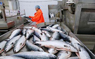 进口三文鱼成传染媒介?专家:不符合逻辑