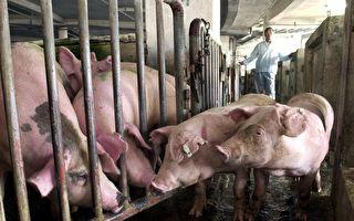 陸豬肉儲備不足10萬噸 兩三個月恐見底