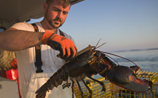 保護龍蝦產業 川普或對中國商品加新税