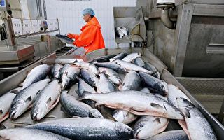 中國下架鮭魚 歐洲供應商股價重挫