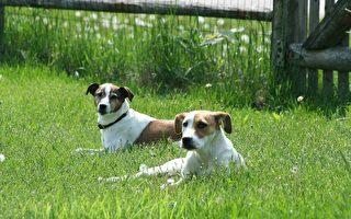 美3歲自閉症男童走失 兩隻忠狗在一旁守護