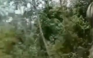 中共云南普洱市林业和草原局表示,中老边境的云南普洱市出现黄脊竹蝗,已累计近10万亩。(视频截图)
