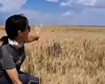 南澇北旱加蟲災 中國糧食供應將如何?(上)