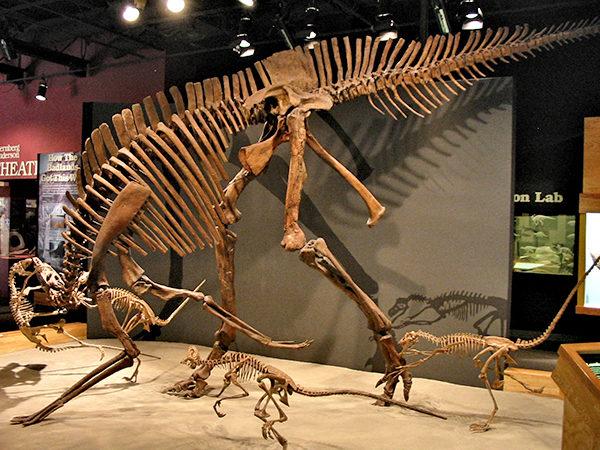 加拿大亞省恐龍公園,恐龍骸骨,Alberta Provincial Park, Alberta travel