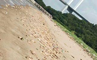 东莞海滩惊现上万猪脚和内脏 遍布海岸线