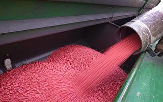 麻州居民收到中國不明種子 農業部籲勿種植