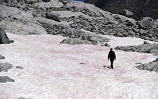 2020年怪事多 義大利冰川變粉紅色