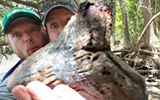 美国夫妇发现一颗数百万年前鲨鱼巨齿