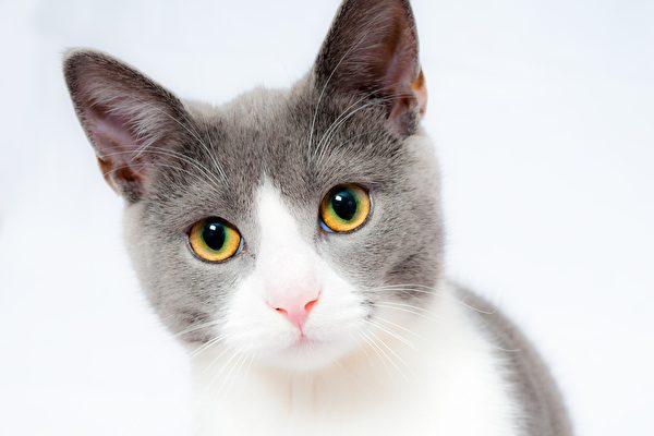 兩隻老鼠打架 小貓在一旁看得渾然忘我