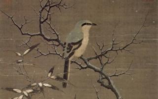 《诗经》里的伯劳鸟