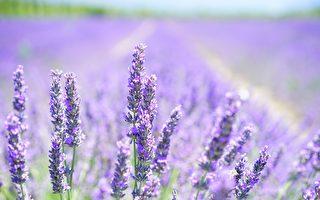 韓國新景點「紫島」 四處都是夢幻般的紫色