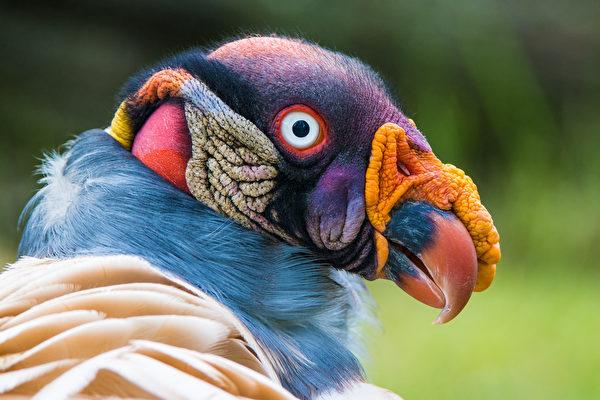這種漂亮的鳥被視為人神之間的信使