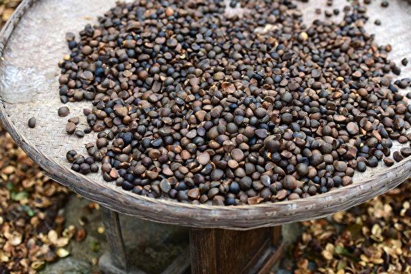 苦茶籽榨油后,剩下的苦茶粕还有许多用途。(Shutterstock)