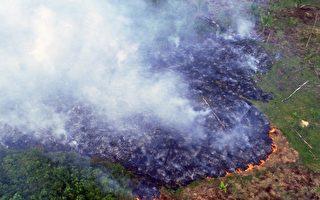林火继续肆虐 亚马逊雨林生态系统或崩溃