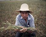 中共稱「糧價穩中有漲」 網民:漲得很穩