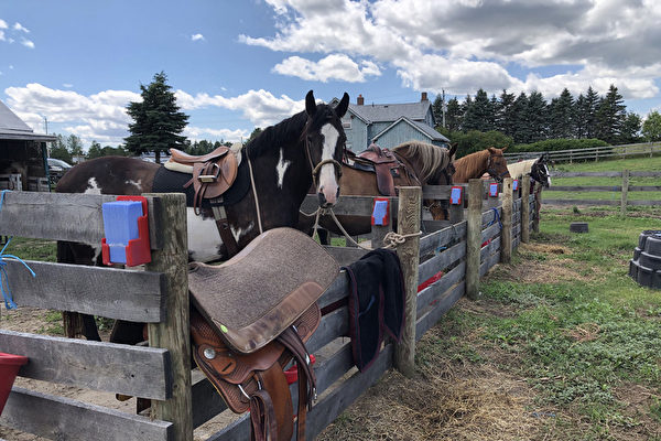 築兒時夢 台人在加拿大經營馬場稱如中樂透