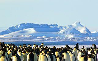 新研究:企鵝源自澳洲新西蘭 並非南極
