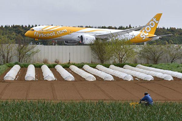 日本农民在成田机场种菜几十年 就是不搬走